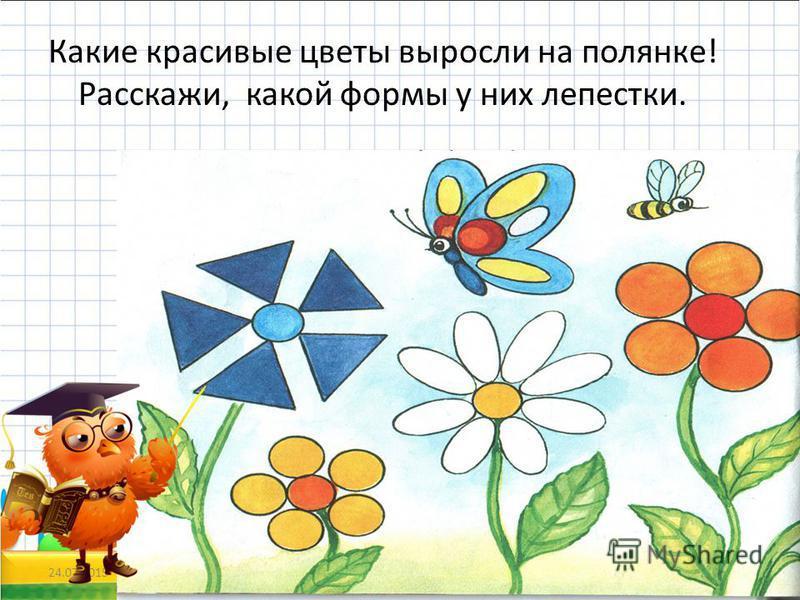 Какие красивые цветы выросли на полянке! Расскажи, какой формы у них лепестки. 24.07.201519