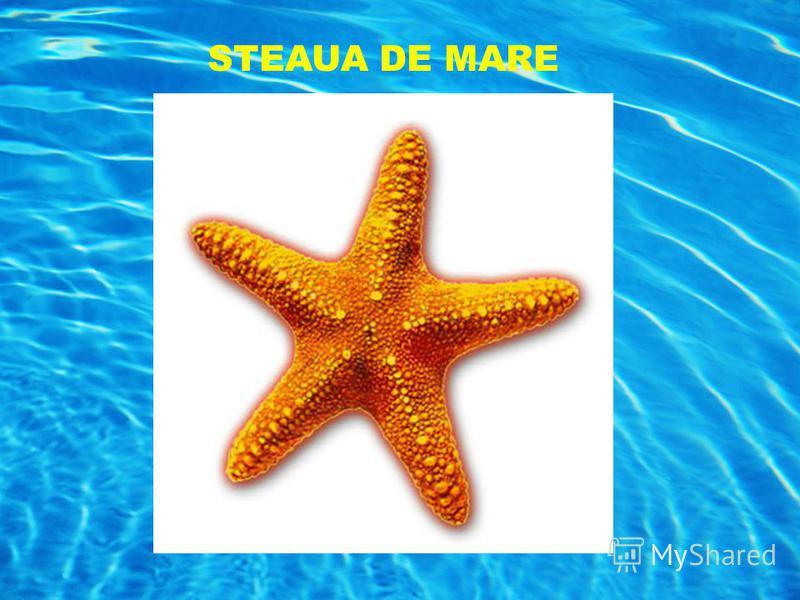STEAUA DE MARE