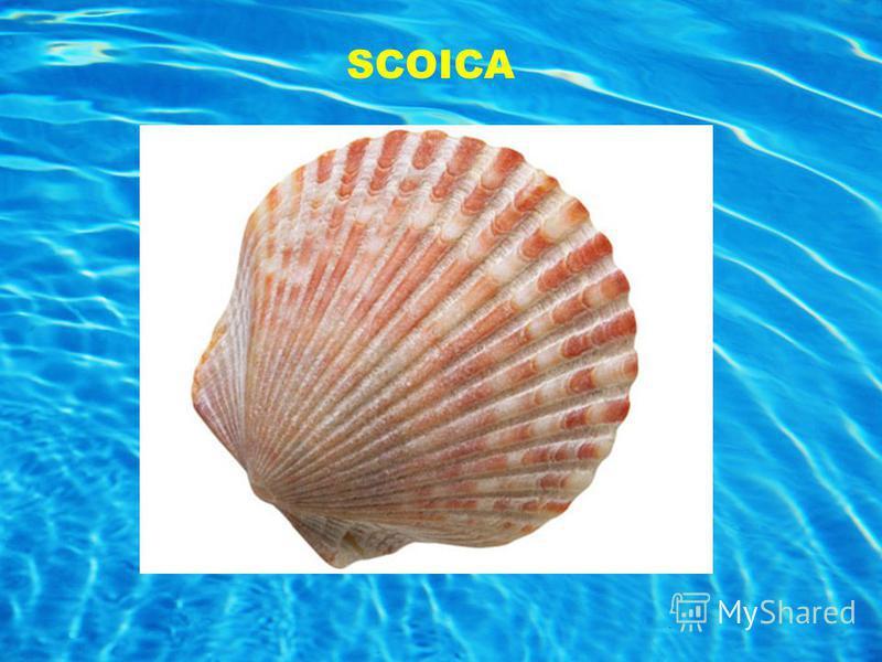 SCOICA