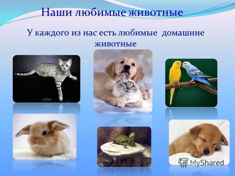 Наши любимые животные У каждого из нас есть любимые домашние животные