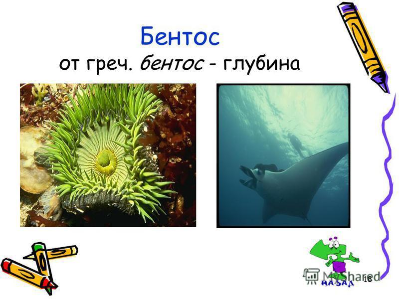 18 Бентос от греч. бентос - глубина