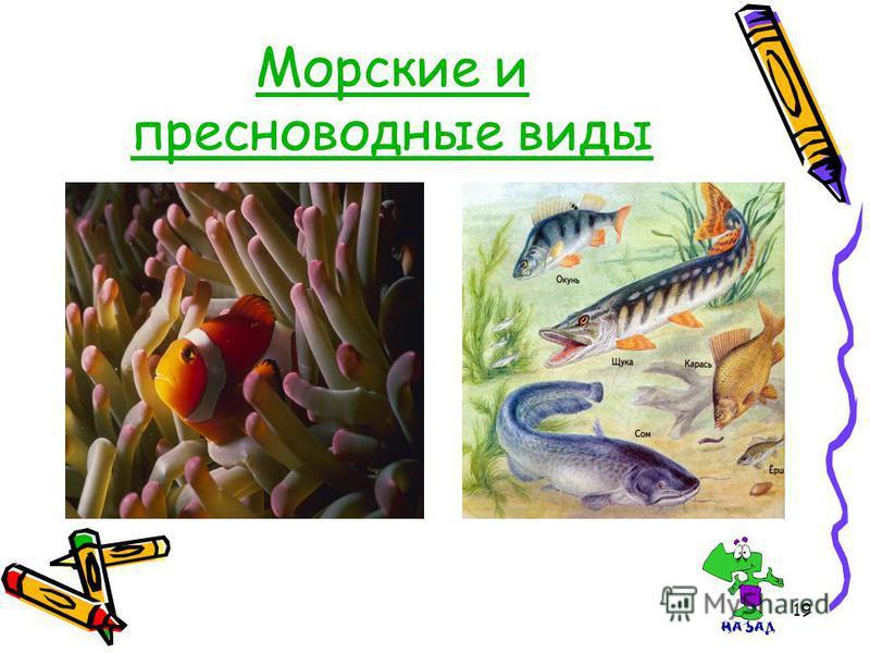 19 Морские и пресноводные виды