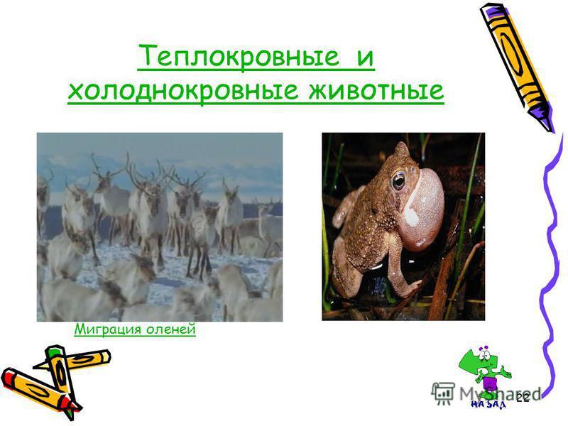 22 Теплокровные и холоднокровные животные Миграция оленей
