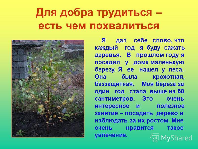 Для добра трудиться – есть чем похвалиться Я дал себе слово, что каждый год я буду сажать деревья. В прошлом году я посадил у дома маленькую березу. Я ее нашел у леса. Она была крохотная, беззащитная. Моя береза за один год стала выше на 50 сантиметр