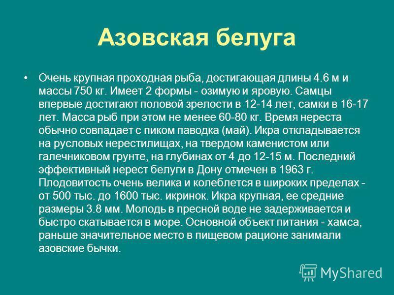 Азовская белуга Очень крупная проходная рыба, достигающая длины 4.6 м и массы 750 кг. Имеет 2 формы - озимую и яровую. Самцы впервые достигают половой зрелости в 12-14 лет, самки в 16-17 лет. Масса рыб при этом не менее 60-80 кг. Время нереста обычно