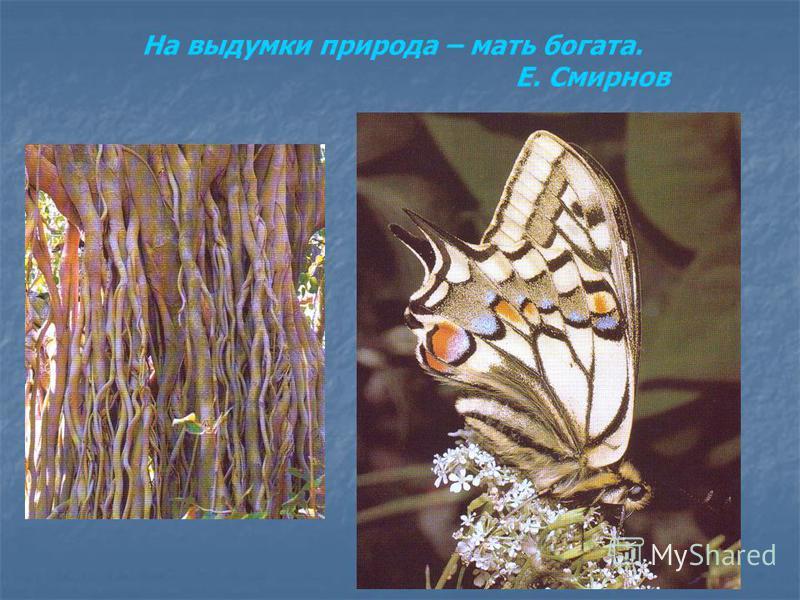На выдумки природа – мать богата. Е. Смирнов