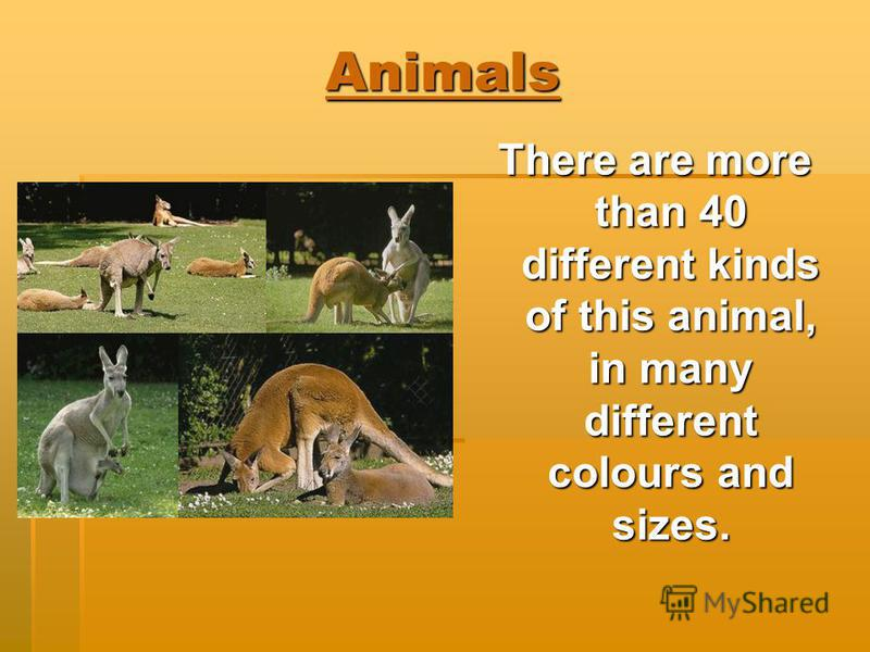 Animals There are more than 40 different kinds of this animal, in many different colours and sizes.