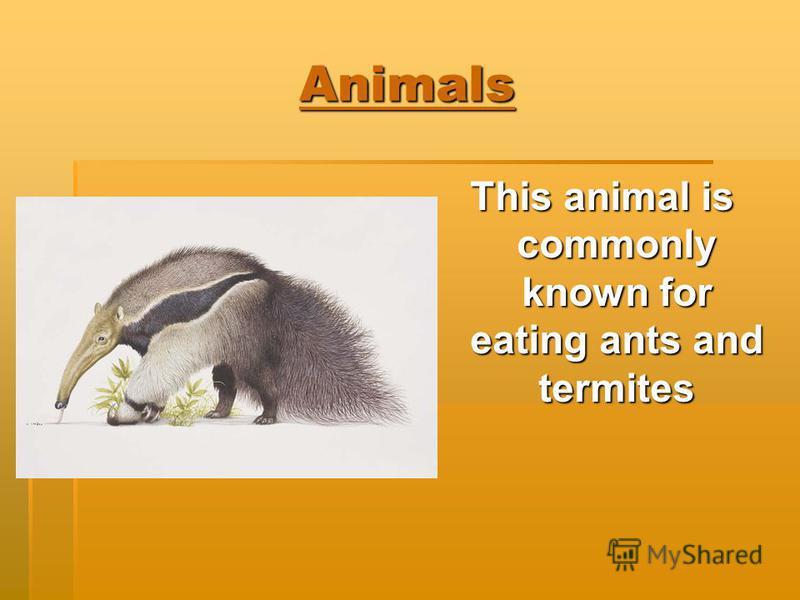 Animals This animal is commonly known for eating ants and termites