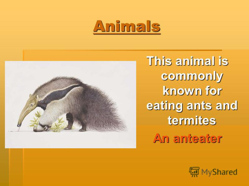 Animals This animal is commonly known for eating ants and termites An anteater