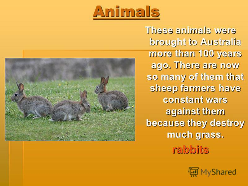 Animals These animals were brought to Australia more than 100 years ago. There are now so many of them that sheep farmers have constant wars against them because they destroy much grass. rabbits