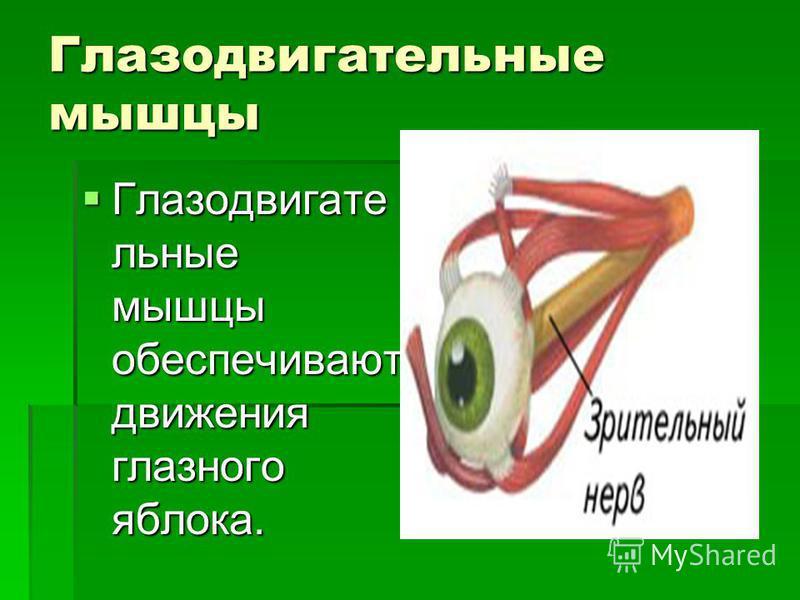 Глазодвигательные мышцы Глазодвигате льные мышцы обеспечивают движения глазного яблока.