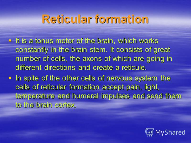 Reticular formation It is a tonus motor of the brain, which works constantly in the brain stem. It consists of great number of cells, the axons of which are going in different directions and create a reticule. It is a tonus motor of the brain, which