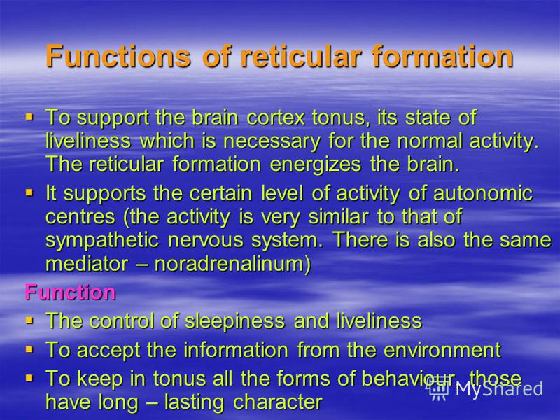function of reticular formation The reticular formation is a comprehensive network of nerves found in the central area of the brainstem it's involved in many of the essential functions of the body, such as the ability to obtain recuperative sleep, sexual arousal, and the ability to focus on tasks without being easily distracted.