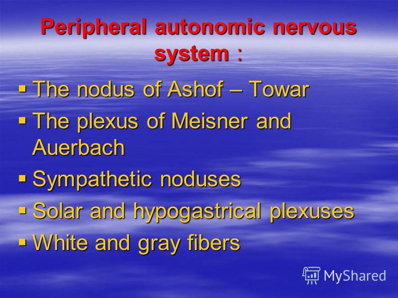 Peripheral autonomic nervous system : The nodus of Ashof – Towar The nodus of Ashof – Towar The plexus of Meisner and Auerbach The plexus of Meisner and Auerbach Sympathetic noduses Sympathetic noduses Solar and hypogastrical plexuses Solar and hypog