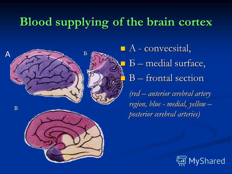Blood supplying of the brain cortex А - convecsital, Б – medial surface, В – frontal section (red – anterior cerebral artery region, blue - medial, yellow – posterior cerebral arteries) А Б В