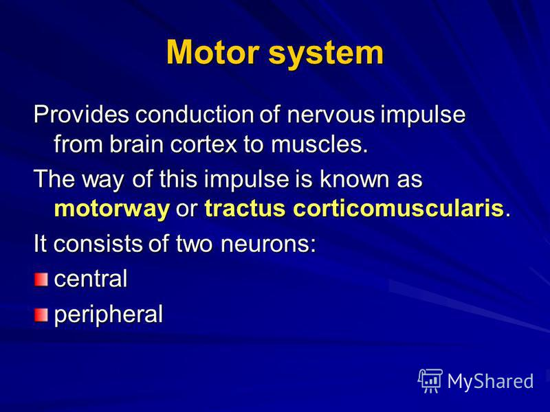 Motor system Provides conduction of nervous impulse from brain cortex to muscles. The way of this impulse is known as motorway or tractus corticomuscularis. It consists of two neurons: centralperipheral