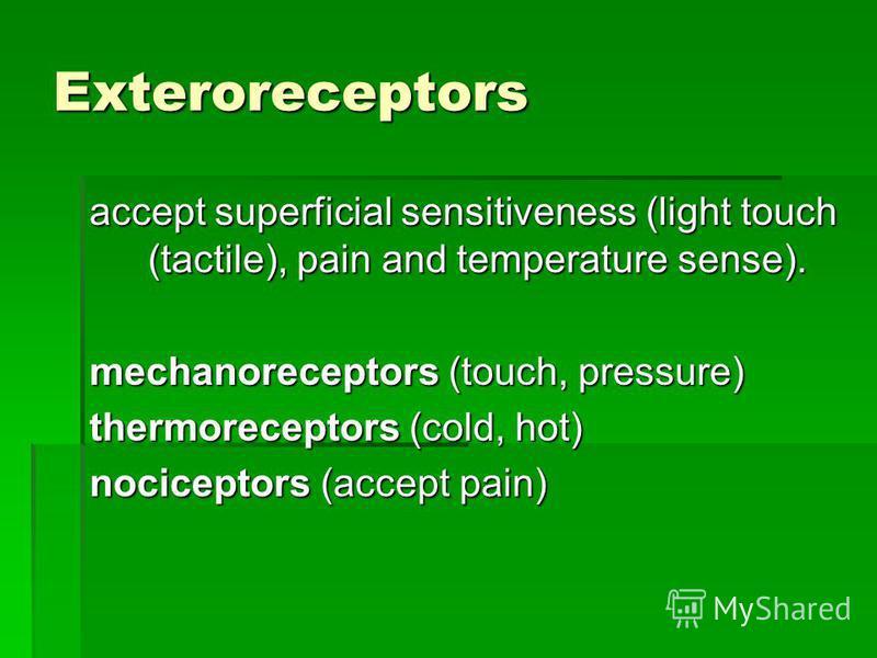 Exteroreceptors accept superficial sensitiveness (light touch (tactile), pain and temperature sense). mechanoreceptors (touch, pressure) thermoreceptors (cold, hot) nociceptors (accept pain)