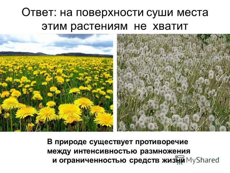 Ответ: на поверхности суши места этим растениям не хватит В природе существует противоречие между интенсивностью размножения и ограниченностью средств жизни
