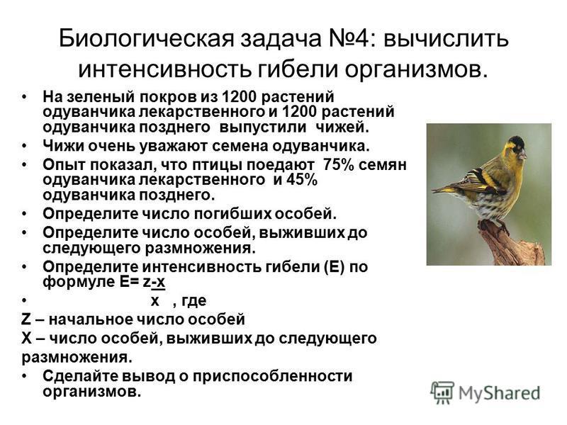 Биологическая задача 4: вычислить интенсивность гибели организмов. На зеленый покров из 1200 растений одуванчика лекарственного и 1200 растений одуванчика позднего выпустили чижей. Чижи очень уважают семена одуванчика. Опыт показал, что птицы поедают