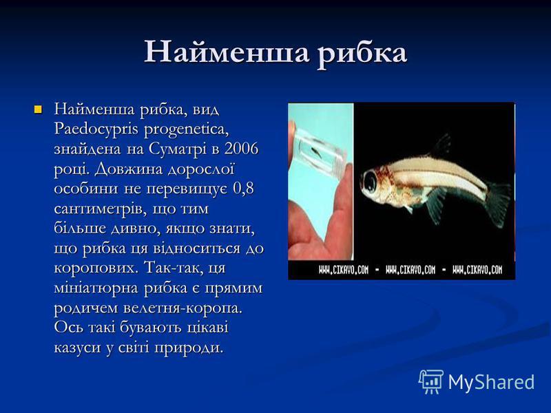 Найменша рибка Найменша рибка, вид Paedocypris progenetica, знайдена на Суматрі в 2006 році. Довжина дорослої особини не перевищує 0,8 сантиметрів, що тим більше дивно, якщо знати, що рибка ця відноситься до коропових. Так-так, ця мініатюрна рибка є