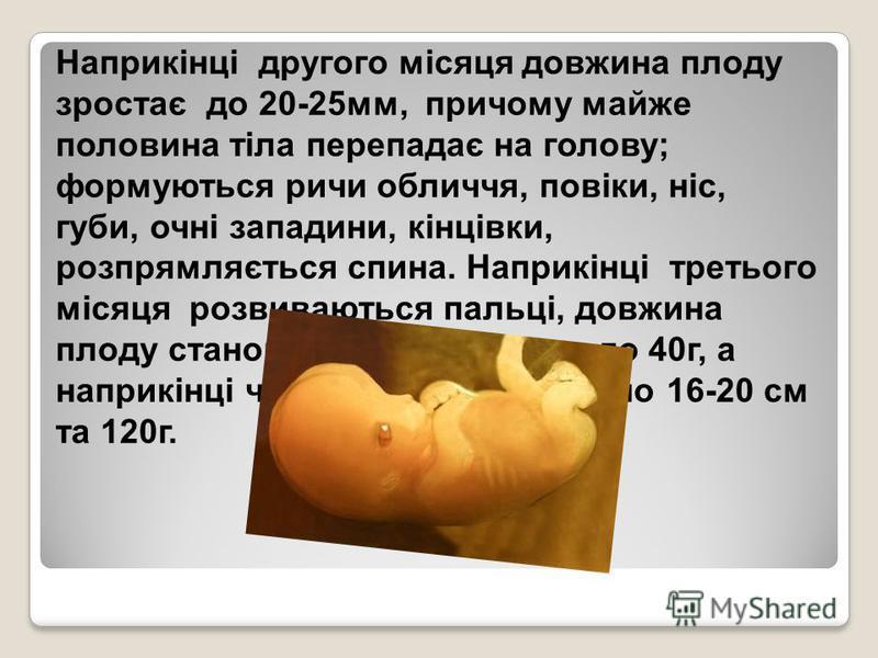 Наприкінці другого місяця довжина плоду зростає до 20-25мм, причому майже половина тіла перепадає на голову; формуються ричи обличчя, повіки, ніс, губи, очні западини, кінцівки, розпрямляється спина. Наприкінці третього місяця розвиваються пальці, до