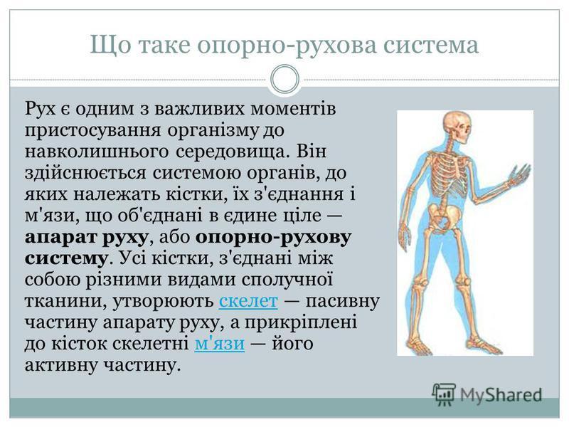 Що таке опорно-рухова система Рух є одним з важливих моментів пристосування організму до навколишнього середовища. Він здійснюється системою органів, до яких належать кістки, їх з'єднання і м'язи, що об'єднані в єдине ціле апарат руху, або опорно-рух