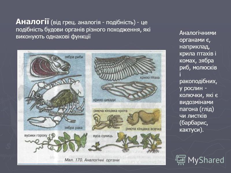Аналогії Аналогії (від грец. аналогія - подібність) - це подібність будови органів різного походження, які виконують однакові функції Аналогічними органами є, наприклад, крила птахів і комах, зябра риб, молюсків і ракоподібних, у рослин - колючки, як