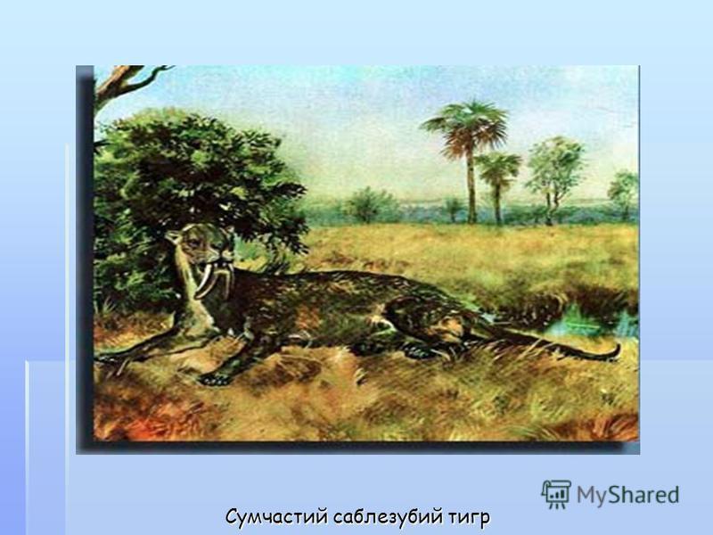Сумчастий саблезубий тигр