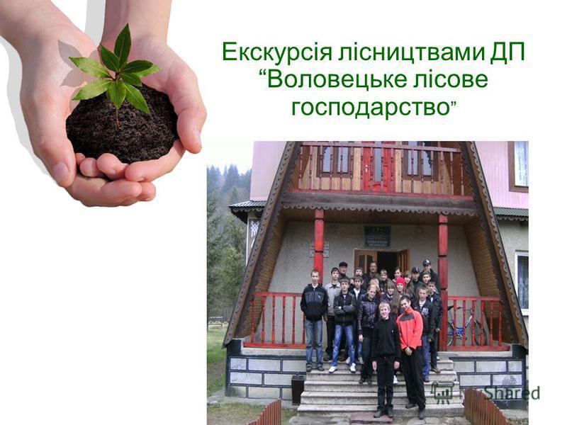 Екскурсія лісництвами ДПВоловецьке лісове господарство