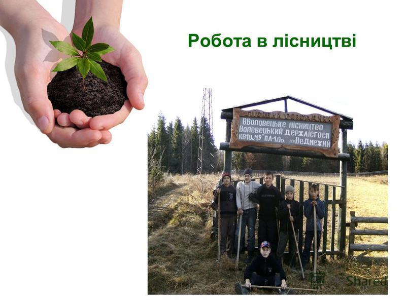 Робота в лісництві