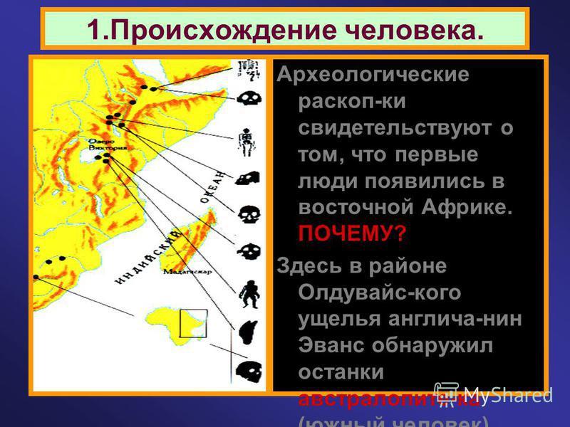 1. Происхождение человека. Археологические раскоп-ки свидетельствуют о том, что первые люди появились в восточной Африке. ПОЧЕМУ? Здесь в районе Олдувайс-кого ущелья англича-нин Эванс обнаружил останки австралопите-ка (южный человек), который жил око