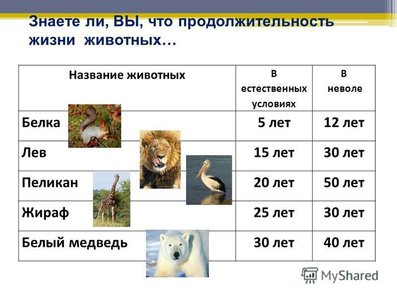 Енот-полоскун в естественных условиях живёт 5 лет, а в Зоопарке продолжительность жизни енота увеличилась в 2 раза. Какова продолжительность жизни енота в Зоопарке? 5 х 2 = 10 (лет)