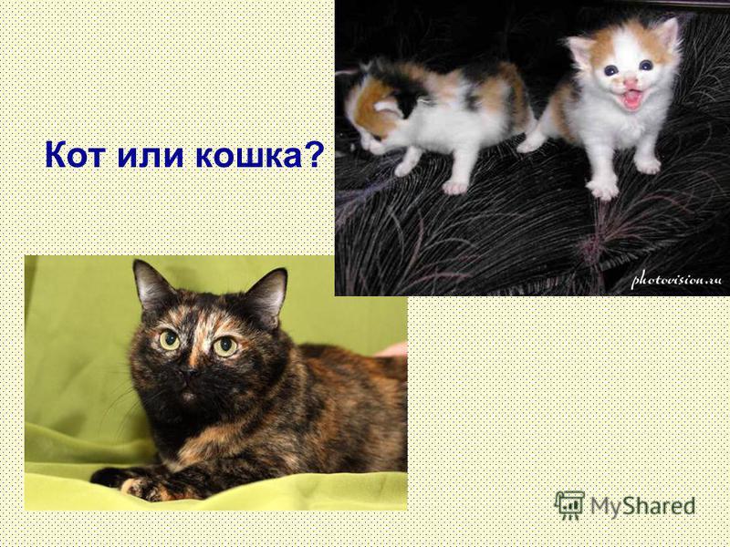 Кот или кошка?