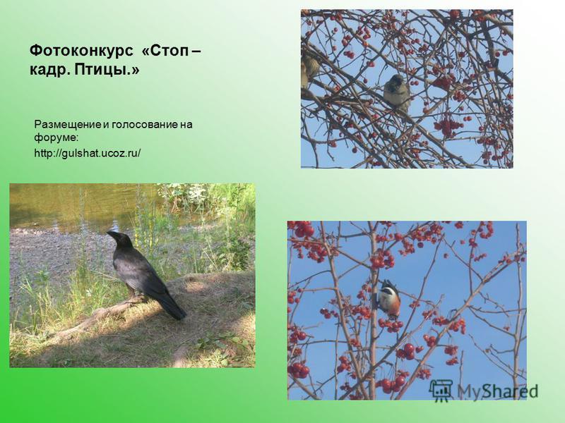 Фотоконкурс «Стоп – кадр. Птицы.» Размещение и голосование на форуме: http://gulshat.ucoz.ru/