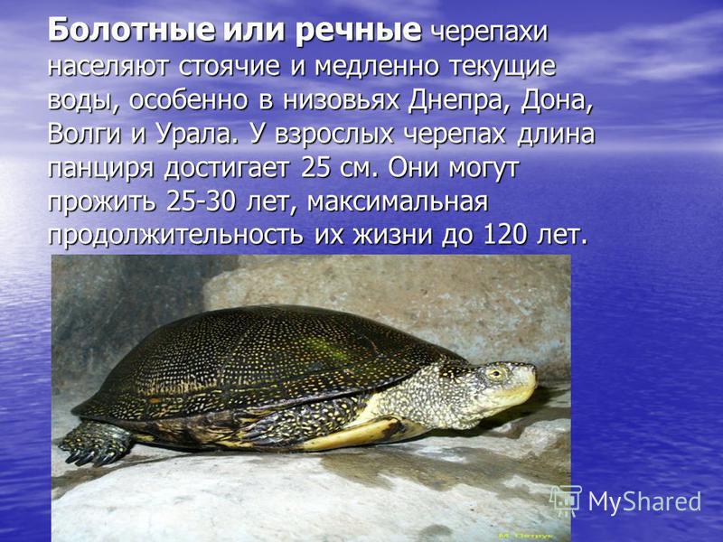 Болотные или речные черепахи населяют стоячие и медленно текущие воды, особенно в низовьях Днепра, Дона, Волги и Урала. У взрослых черепах длина панциря достигает 25 см. Они могут прожить 25-30 лет, максимальная продолжительность их жизни до 120 лет.