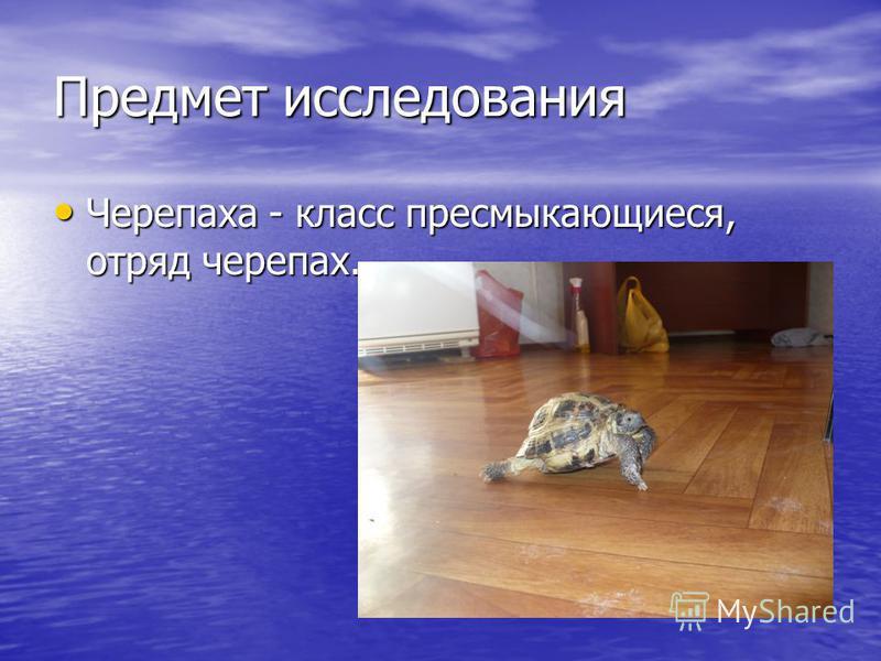 Предмет исследования Черепаха - класс пресмыкающиеся, отряд черепах. Черепаха - класс пресмыкающиеся, отряд черепах.