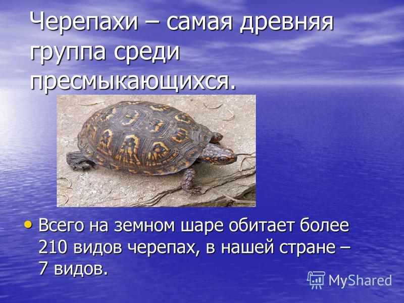 Черепахи – самая древняя группа среди пресмыкающихся. Всего на земном шаре обитает более 210 видов черепах, в нашей стране – 7 видов. Всего на земном шаре обитает более 210 видов черепах, в нашей стране – 7 видов.