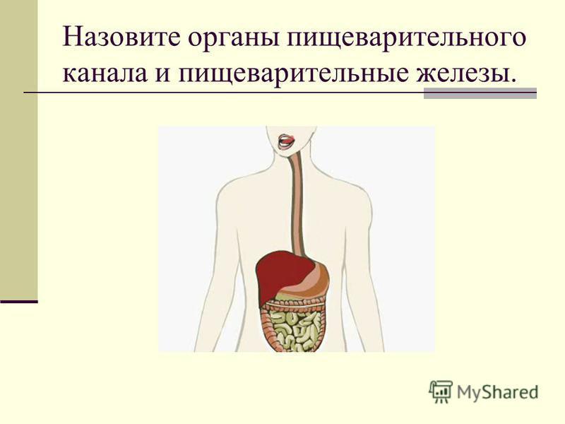 Назовите органы пищеварительного канала и пищеварительные железы.