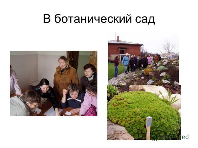 В ботанический сад