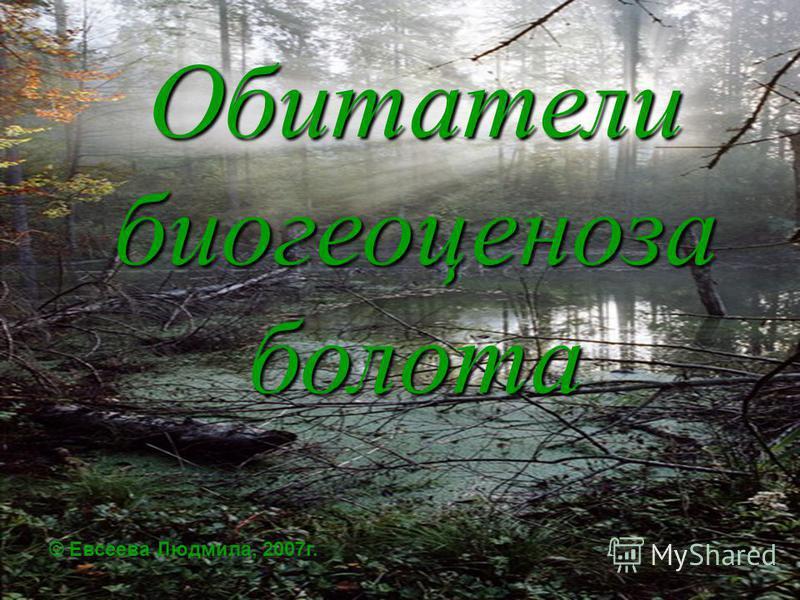 Обитатели биогеоценоза болота © Евсеева Людмила, 2007г.