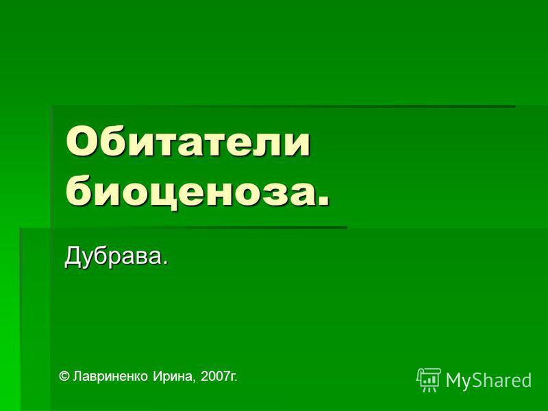Обитатели биоценоза. Дубрава. © Лавриненко Ирина, 2007 г.