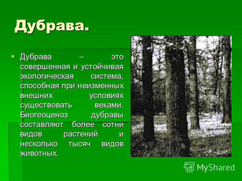 Дубрава. Дубрава – это совершенная и устойчивая экологическая система, способная при неизменных внешних условиях существовать веками. Биогеоценоз дубравы составляют более сотни видов растений и несколько тысяч видов животных. Дубрава – это совершенна