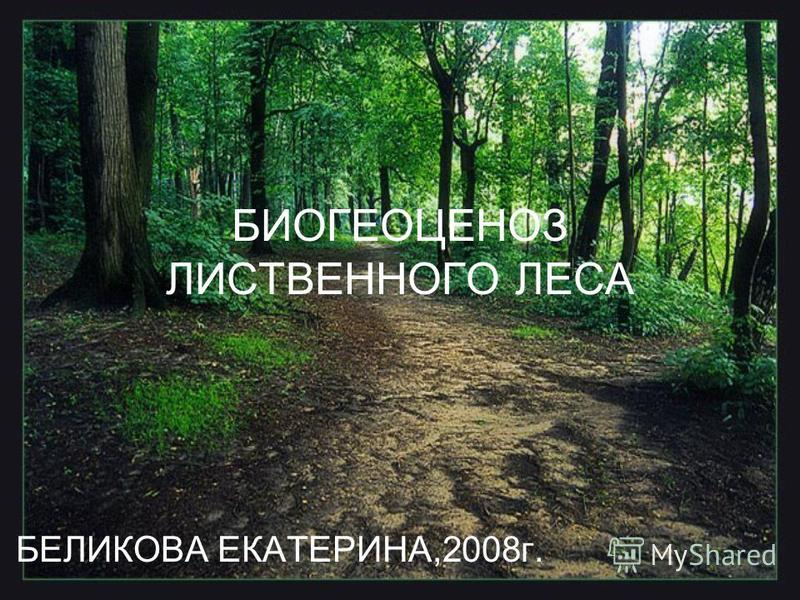 БИОГЕОЦЕНОЗ ЛИСТВЕННОГО ЛЕСА БЕЛИКОВА ЕКАТЕРИНА,2008 г.
