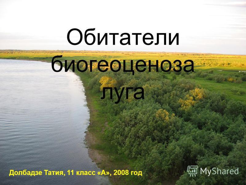 Обитатели биогеоценоза луга Долбадзе Татия, 11 класс «А», 2008 год