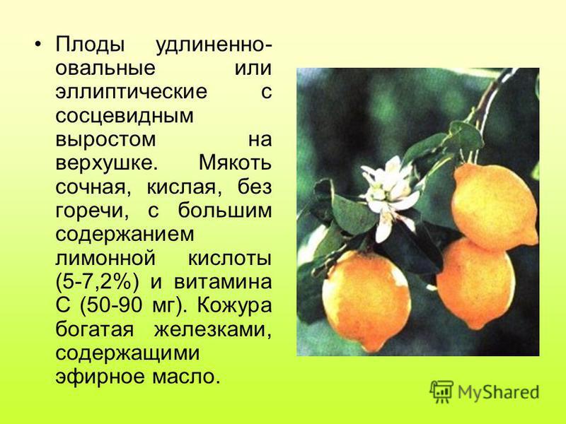 Плоды удлиненно- овальные или эллиптические с сосцевидным выростом на верхушке. Мякоть сочная, кислая, без горечи, с большим содержанием лимонной кислоты (5-7,2%) и витамина С (50-90 мг). Кожура богатая железками, содержащими эфирное масло.