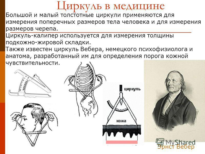 Эрнст Вебер Большой и малый толстотные циркули применяются для измерения поперечных размеров тела человека и для измерения размеров черепа. Циркуль-калипер используется для измерения толщины подкожно-жировой складки. Также известен циркуль Вебера, не