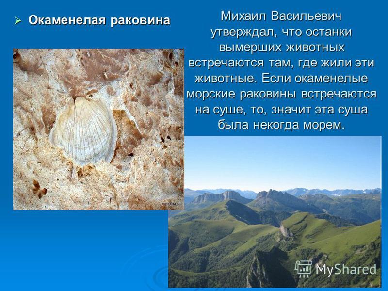 Михаил Васильевич утверждал, что останки вымерших животных встречаются там, где жили эти животные. Если окаменелые морские раковины встречаются на суше, то, значит эта суша была некогда морем. Окаменелая раковина Окаменелая раковина