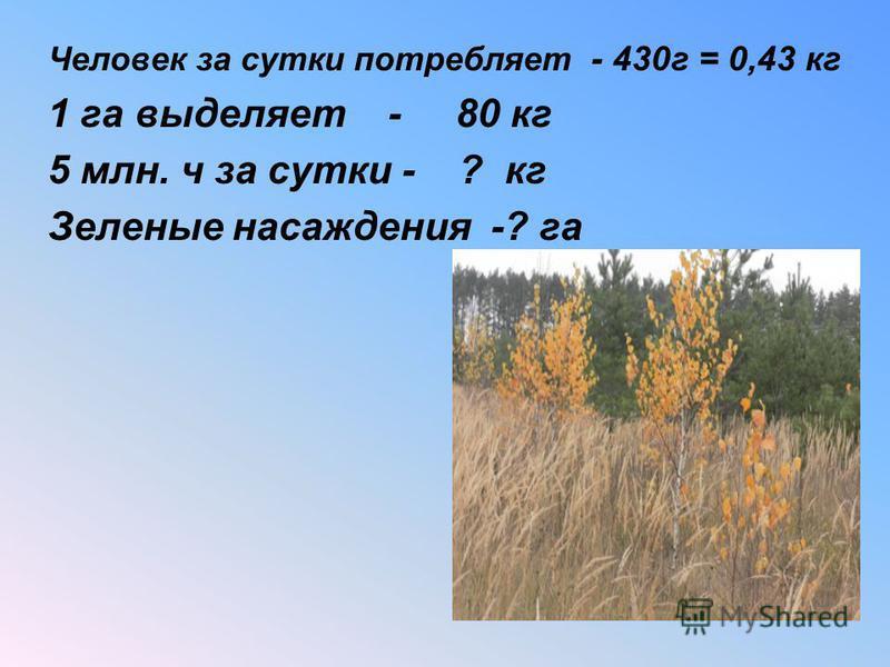 Задача 2 Человек в среднем за сутки потребляет 430 г кислорода, а выделяет 800 г углекислого газа. Один гектар зеленых насаждений поглощает примерно столько же углекислого газа, сколько выдыхает 200 человек, при этом выделяет 80 кг кислорода в сутки.