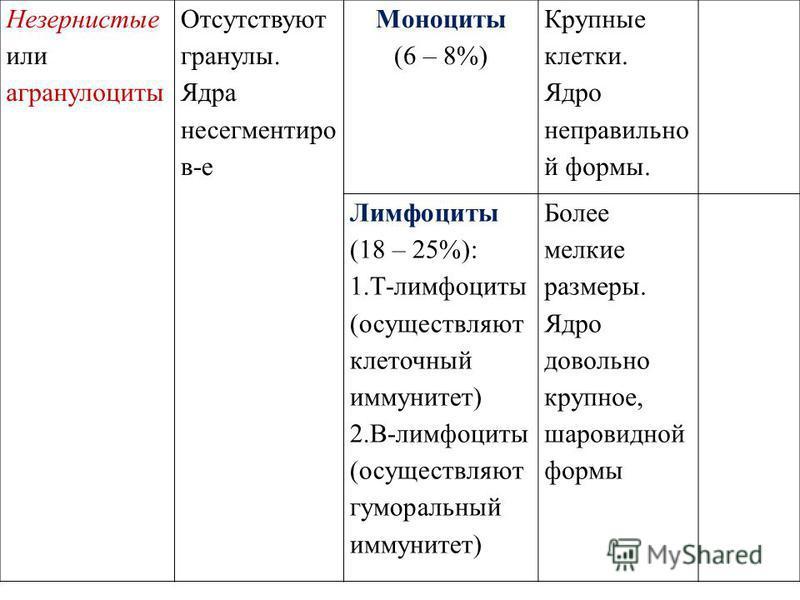 Незернистые или агранулоциты Отсутствуют гранулы. Ядра не сегменты крови Моноциты (6 – 8%) Крупные клетки. Ядро неправильной формы. Лимфоциты (18 – 25%): 1.Т-лимфоциты (осуществляют клеточный иммунитет) 2.В-лимфоциты (осуществляют гуморальный иммунит