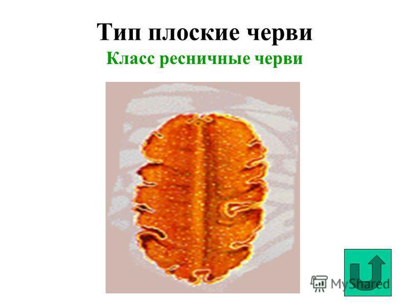 Тип плоские черви Класс ресничные черви